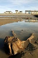 Exposed prehistoric tree stump at Borth, Ceredigion, Wales.