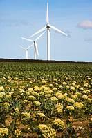 Carland Cross Windfarm. Cornwall. England. UK.