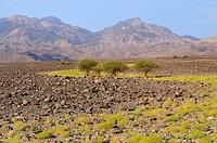 Lava fields. Danakil depression. Afar province. Ethiopia.