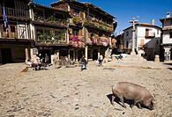 Iberian pig in La Alberca. Salamanca-prov. Spain.