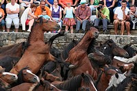 Rapa das Bestas, Spanish tradition that involves cutting the manes of the horses. Sabucedo, Galicia, Spain