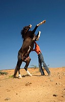 Keeper with domestic horse jumping, Gujarat, India