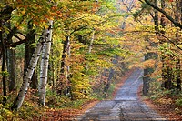 Autumn scenery along road in the Sugar Hill area of New Hampshire