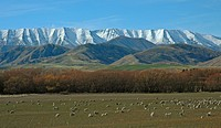 Malvern Hills and Torlesse Range after a winter snowfall Canterbury New Zealand