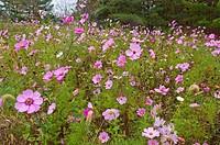 wild flowers growing on WV highway