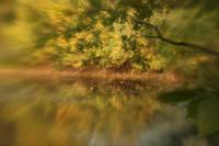 dreamy scene of trees by water