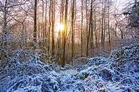france,île de france,vallée de chevreuse : soleil dans la forêt enneigée
