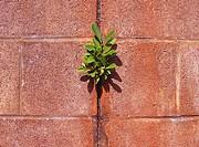 Plant grows in cinderblock wall