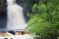 Thornton Force in Full Flow After Heavy Rain Ingleton Yorkshire Dales National Park England