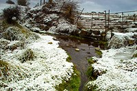 Greenery protruding from the snow by the banks of a small stream
