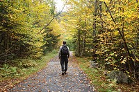 Franconia Notch State Park - Man walking along Franconia Notch Bike Path during the autumn months in the White Mountains, New Hampshire USA