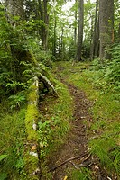 Trail, Forest, Great Smoky Mountains