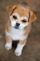 Cute puppy looking up at the camera
