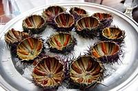 Sea Urchins  Palamós  Costa Brava  Catalunya  Spain