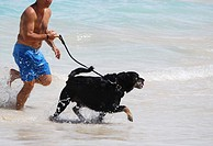 Dog runs in surf