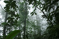 Cloudy forest, Henri Pittier National Park, Venezuela