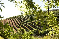 Tokara Vineyards - Cape Town