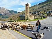 Shepherd through Taüll, Vall de Boi, Pyrenees Mountains, Lleida province, Catalonia, Spain