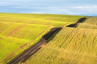 Fields in the Palouse, a rich farming area in eastern Washington State, USA