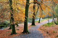 Path by the River Wharfe Strid Wood Wharfedale Yorkshire England