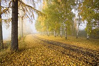 autumn scenery, Finland