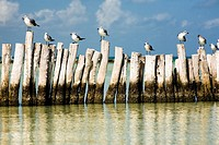 Holbox Island, Yucatán, México