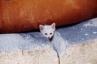 Young cat under the door , Lindos greece