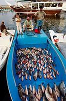 Middle East, Oman, Mussandam area, fish market od Dibba.