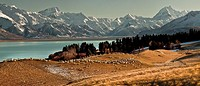 High country sheep station above Lake Pukaki, Mt Sefton left and Aoraki / Mt Cook, winter, Canterbury, New Zealand.