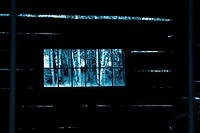 Aspen trees through a window