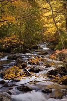 Autumn, Tremont, Great Smoky Mountains National Park, TN