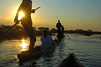Boatmen with tourists in mokoro logboats on a sunset excursion in the Okavango Delta, Botswana
