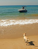 Sailing boat and dog ,Costa Dorada, Tarragona, Spain