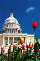 US Capitol, Springtime