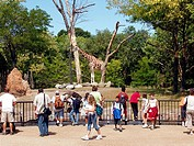 Crowd assembled at the Giraffe and Ostrich enclosure at Chicago´s Lincoln Park Zoo
