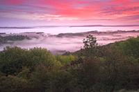 Misty Dawn on the South Downs nr Elsted West Sussex