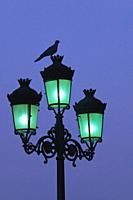 Bird on top of city lamp post at dusk
