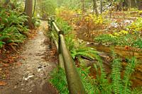 Beaver Creek and Beaver Lake Trail, Stanley Park, Vancouver, British Columbia, Canada