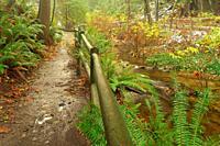 Beaver Creek and Beaver Lake Trail, Stanley Park, Vancouver, British Columbia, Canada