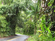Old Hawaiian highway north of Hilo, Big Island, Hawaii, USA