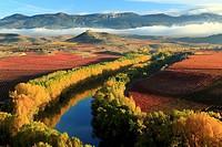 Autumn, River Ebro, La Rioja, Spain