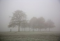 Foggy Clapham Common Tree