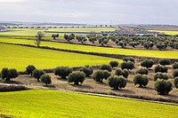 Farmlands in Pinto, Madrid province, Spain.