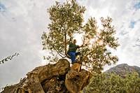 Spain, Mallorca, Balearic Islands, Biniaraix, Farmers olive pruning