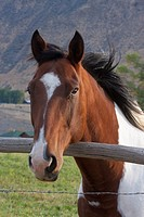 Ranch Horse Portrait in the Rocky Mountains USA.