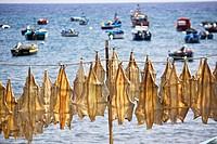 Cod drying at Camara de Lobos Harbour, Madeira