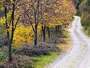 Pista forestal en otoño en el Valle de Valvanera - Anguiano - Sierra de la Demanda - La Rioja - España