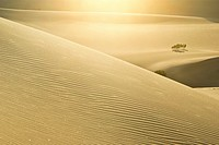 Sunlight glistens in the sparkling and rippled sands of dunes in Death Valley, California