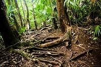 Sian Ka´an Biosphere Reserve  Quintana Roo, Mexico