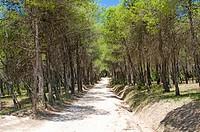 Sierra de Espuna National Park, Region of Murcia, Spain, Europe